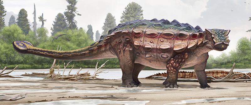 Panzerechse aus der Gruppe der Ankylosaurier