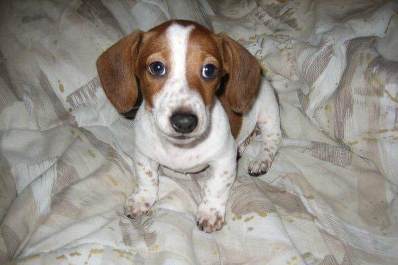 Hund Frankie