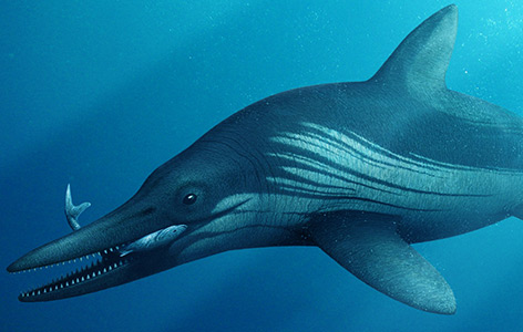 Künstlerische Illustration des Protoichthyosaurus