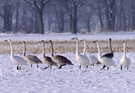 Wilde Heimat - Der Winter