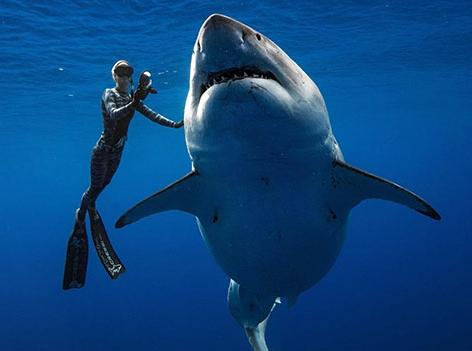 Grösster Weisser Hai Aller Zeiten