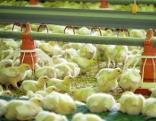 Antibiotika im Essen - Gefahren für unsere Gesundheit    Originaltitel: 45 Min - Die Antibiotika-Falle