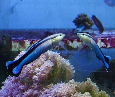 Haben Fische Selbstbewusstsein?