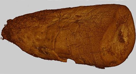 Neandertaler aßen vor allem Fleisch