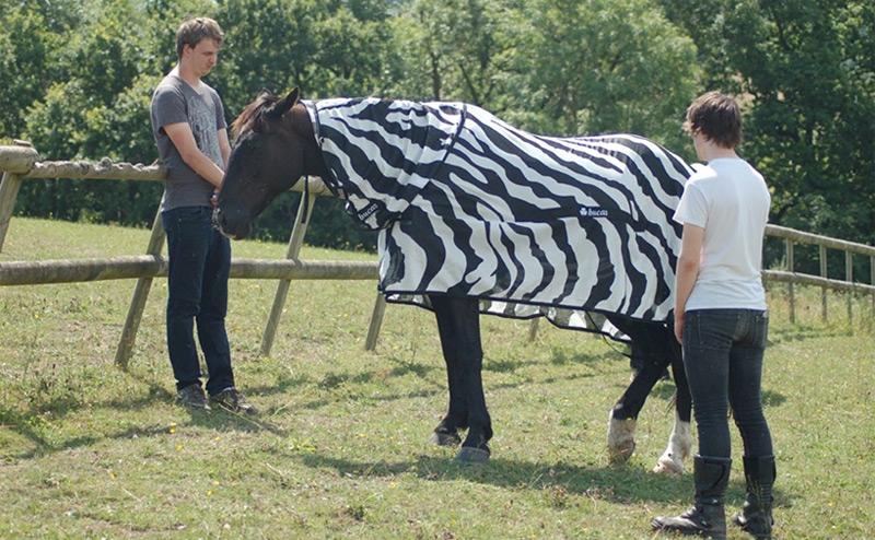 Ein Pferd im Zebrakostüm