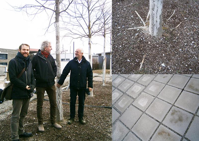 """Die Experten der Schwammstadt, die Wurzeln eines """"Schwammbaums"""" und versickerungsoffene Pflastersteine"""