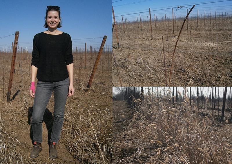 Stefanie Renner in ihrem Weingarten, der nicht bewässert wird