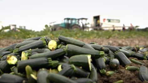 Wie gut ist unser Gemüse?