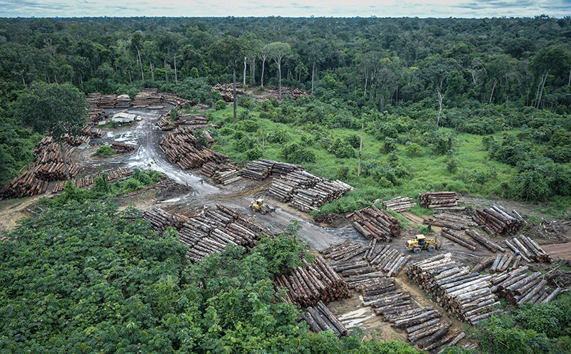 Amazonien: Abholzung im Regenwald