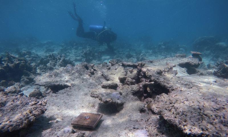 Forscher tauchen zum Great Barrier Reef