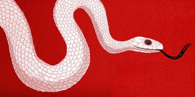 Grafik: Schlange