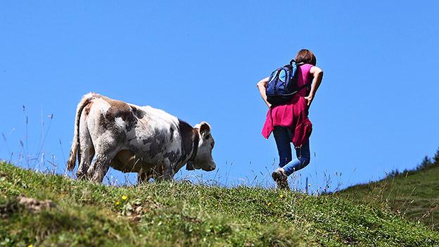 Kuh und Wanderin auf Alm