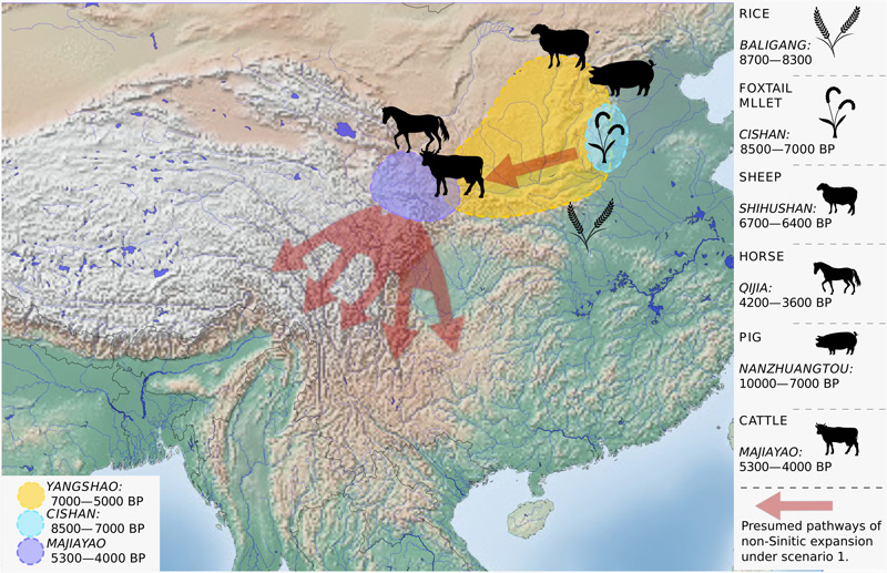 Woher die chinesischen Sprachen kommen – science.ORF.at