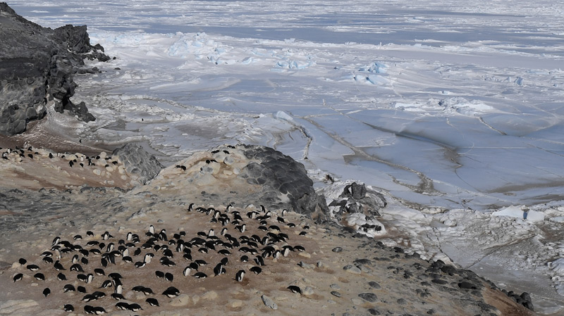 Pinguine und Robben düngen die Antarktis – science.ORF.at