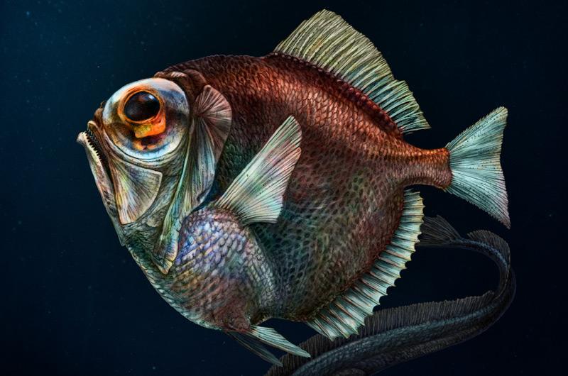 Ein Tiefseefisch, der Farben sieht – science.ORF.at