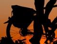 Silhouette eines Radfahrers vor Sonnenuntergang