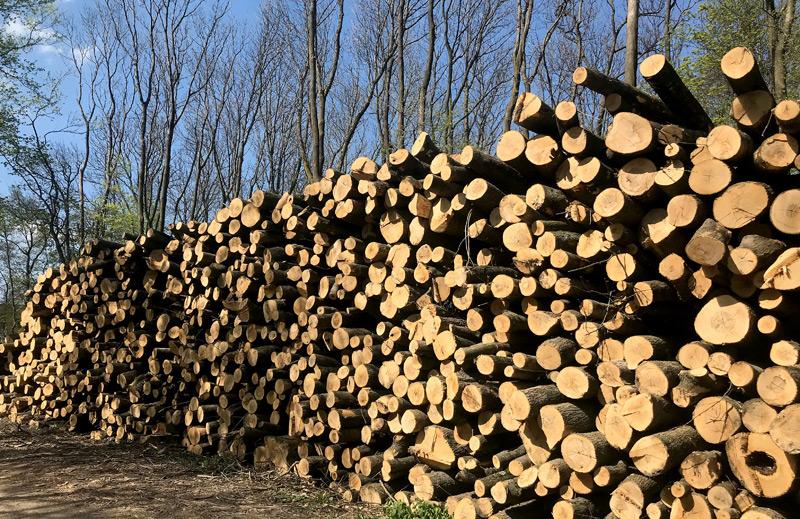 Stapel von gefällten Baumstämmen