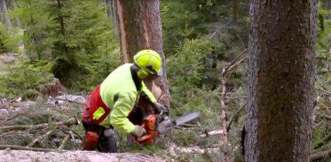 Leben im Mürztal - Forstarbeit an der Baumgrenze    Originaltitel: Forstarbeit an der Baumgrenze