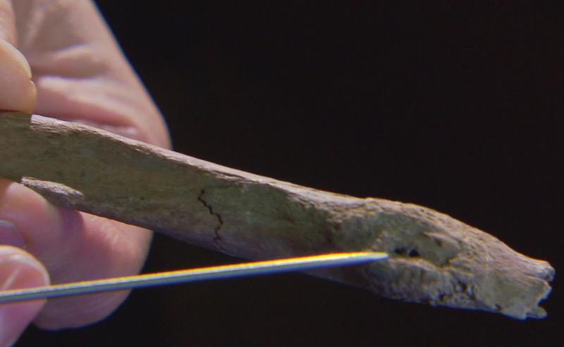 Abnützungen an den Knochen zeugen von harter Arbeit der Bergfrauen in Hallstatt