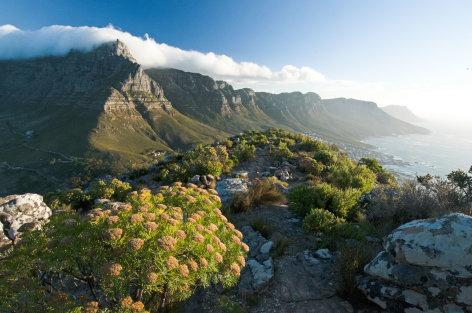 Das Kap - Zwischen Tropen und Eismeer    Originaltitel: Africa