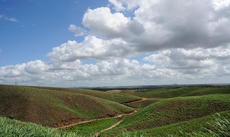 Zuckerrohrfeld in Brasilien