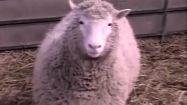 Klonschaf Dolly