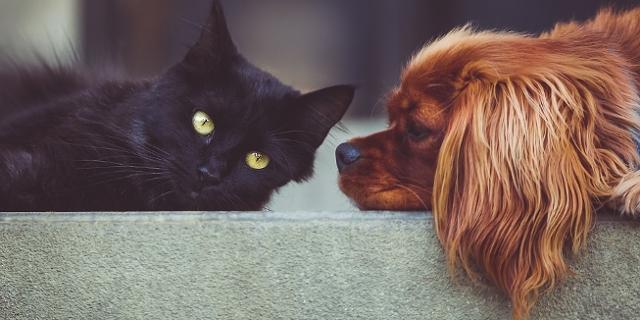 Hund und Katze lieb
