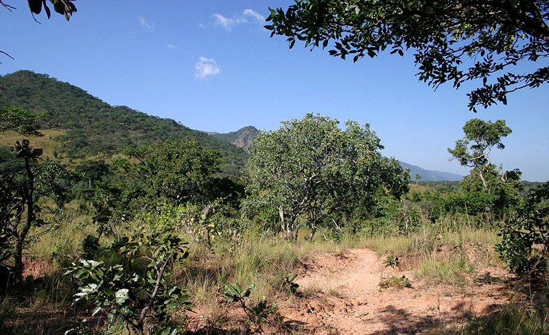 Waldsavanne in der DR Kongo