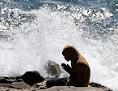 Ein Migrant betet am Mittelmeer