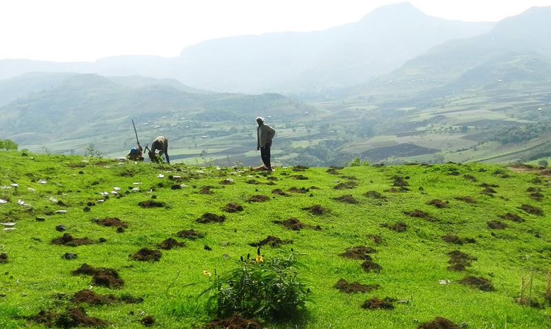 Aufforstungsprojekt in Äthiopien
