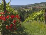 Erlebnis Österreich Blaue Reben - Grünes Gold. Das Schilcherland