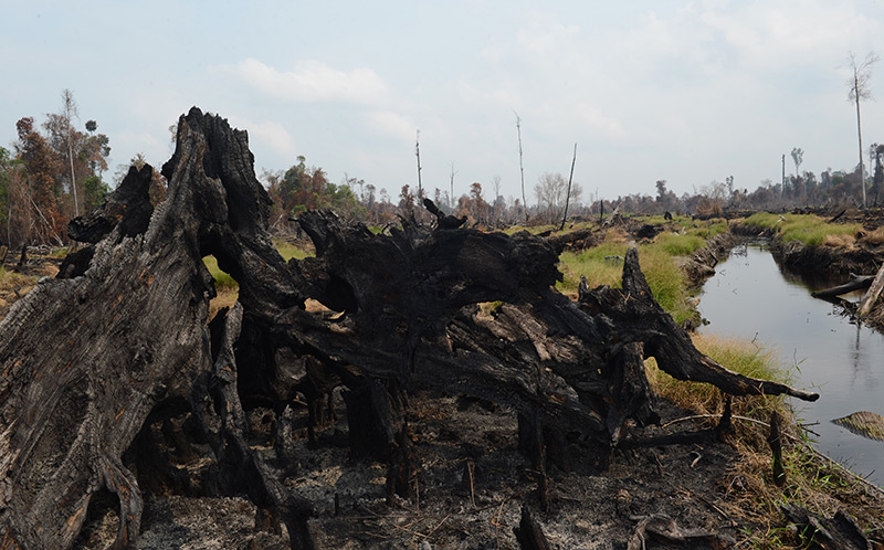Verkohlte Baumstümpfe in Indonesien
