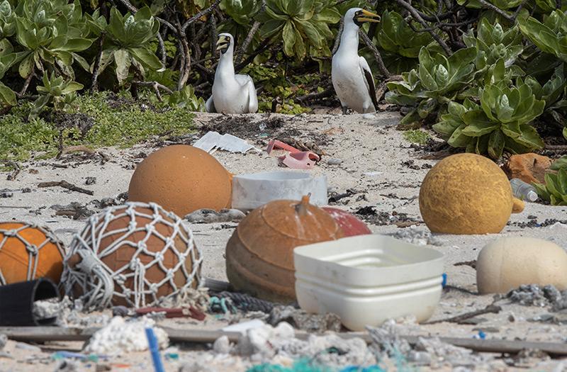 Am Strand von Henderson Island