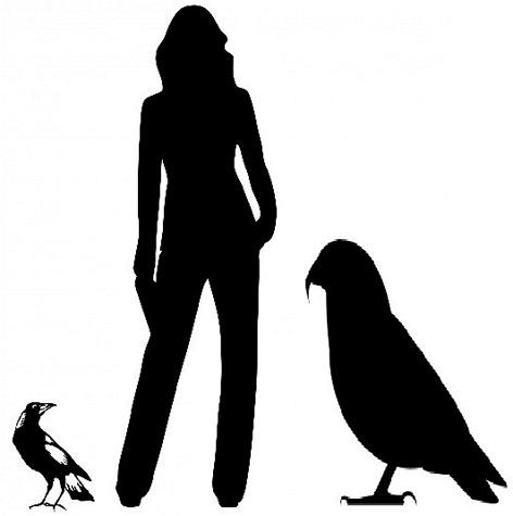 Größenvergleich zwischen Riesenpapagei, Mensch und Elster