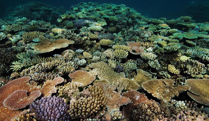 Ein gesundes Korallenriff