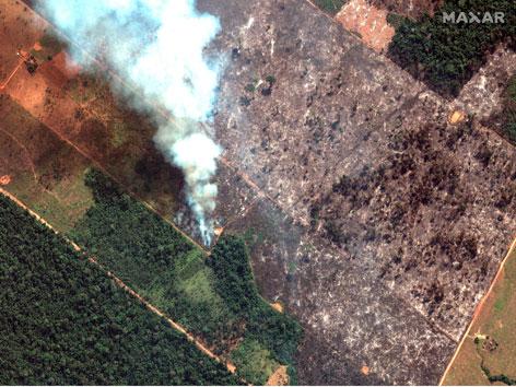 Satellitenaufnahme von abgebranntem Regenwald und Rauchsäule in Brasilien