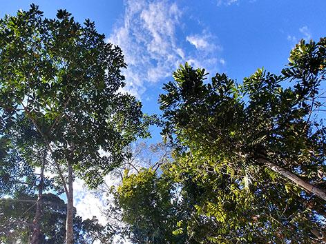 Regenwaldbäume mit Himmel