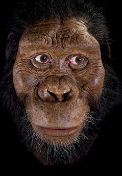 Rekonstruktion des Australopithecus anamensis