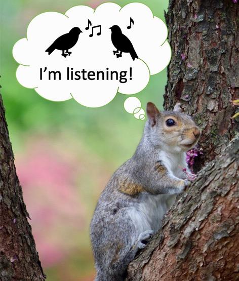 Illustration eines lauschenden Eichhörnchens