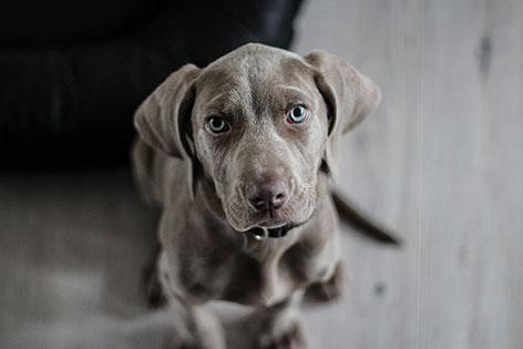 Der ö3 Sprüche Check Beißen Bellende Hunde Wirklich Nicht