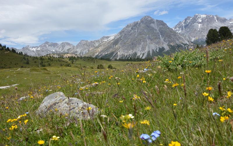 Eine Bergwiese im Schweizer Nationalpark – auch die Alpenflora ist vom Klimawandel betroffen.