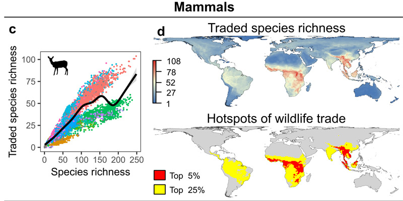 Die Epizentren des illegalen Wildtierhandels (Säugetiere)