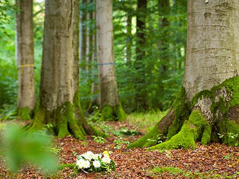 """""""Klosterwald"""": Naturbestattung unter Bäumen – religion.ORF.at"""