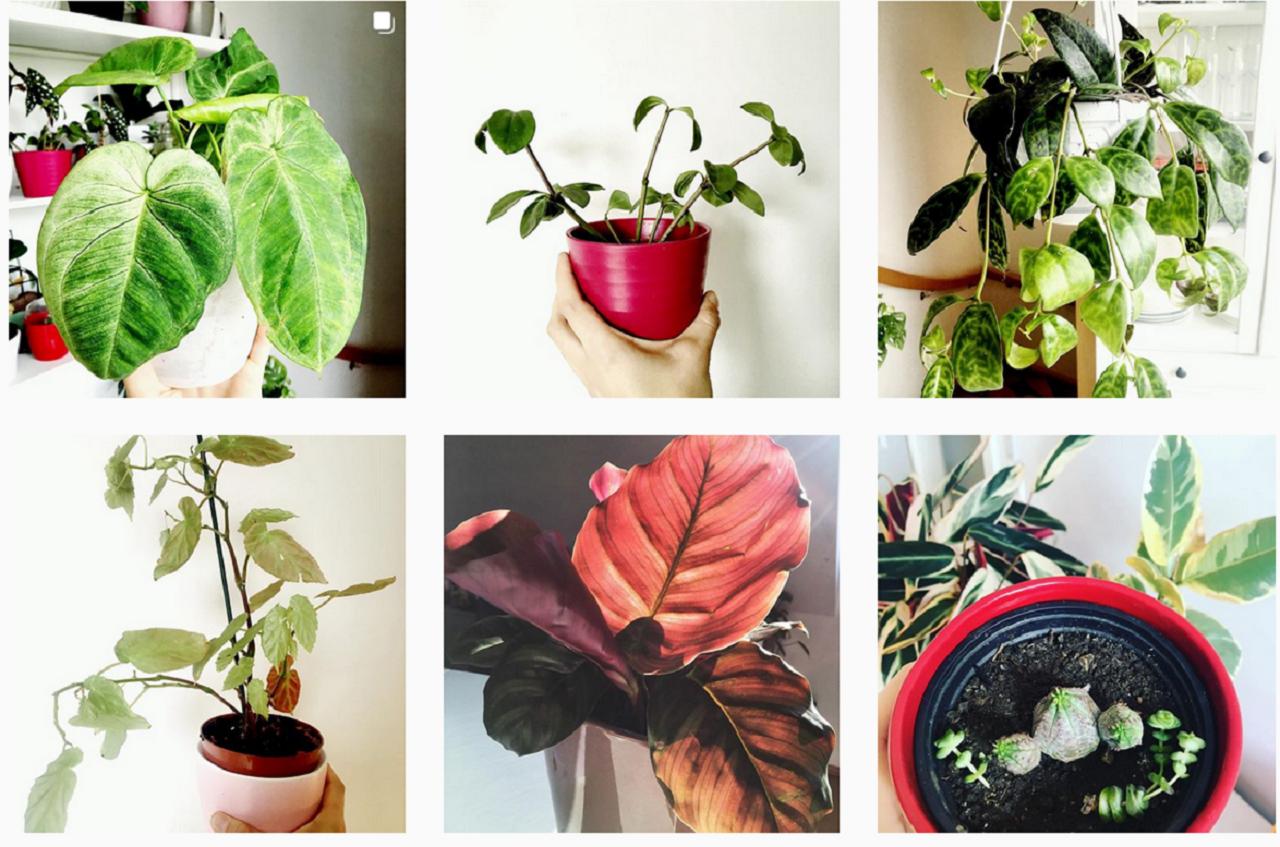 Der Instagram-Account der Plantfluencerin Iwona Laub