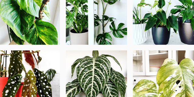 Der Instagram-Account der Plantfluencerin Iwona Laub