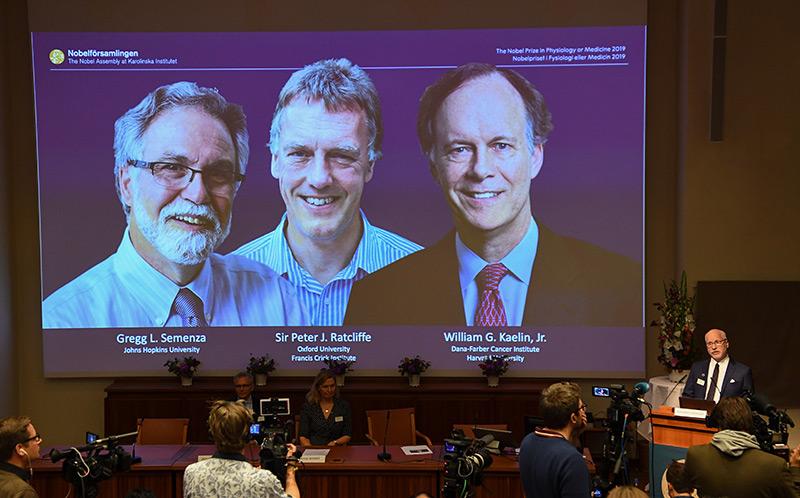 Die Medizinnobelpreisträger 2019: Aufnahme von der Pressekonferenz des Nobelkomitees in Stockholm
