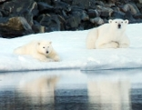 Die Spur des Bären (1)  Nordwärts - In Kanadas schmelzender Arktis