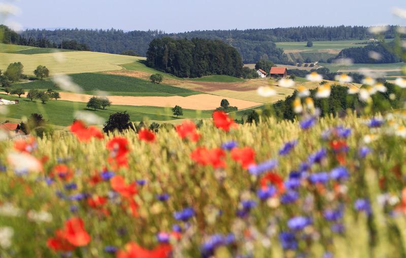 Blühende Wiese in Hügellandschaft