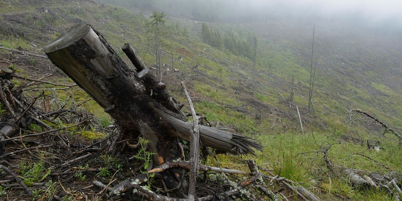 Deforestation in Romania