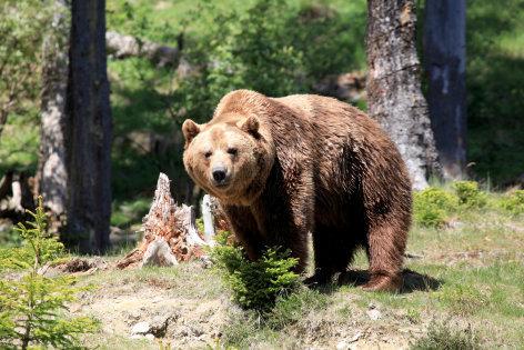 Unter Wölfen, Bären und Geiern - Ein Jahr im Wildpark Mautern